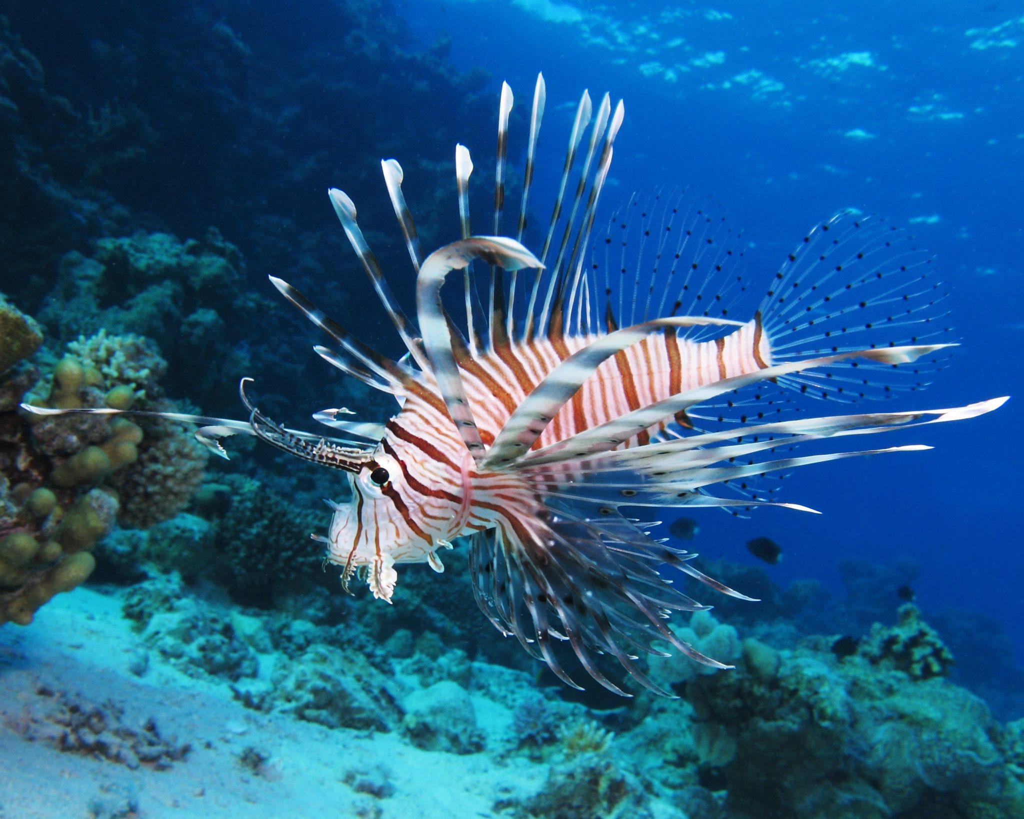 Learn more about lionfish this weekend
